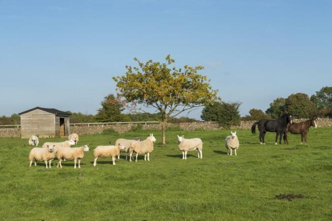 Sheep & Ponies cameo