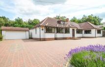 Bungalow for sale in London Road, Bagshot...