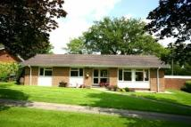 Bungalow to rent in Ditton Place...