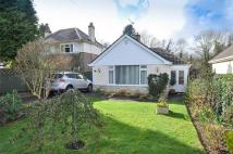 Detached Bungalow in Ivy Road, WIMBORNE...