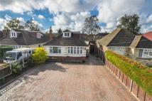 Detached Bungalow for sale in Lower Blandford Road...