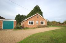 Detached Bungalow to rent in Holmsey Green, Beck Row...