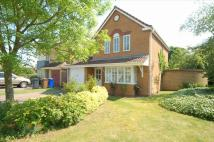 Detached property to rent in Oxford Close, Mildenhall...