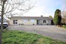 4 bed Detached Bungalow in Bedw, Pontyfenni...