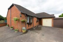 Detached Bungalow to rent in Peacock Gardens, Newent...