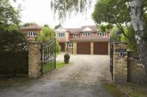 Detached house to rent in Sunning Ave, Sunningdale...
