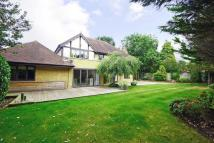 Detached property to rent in Icklingham Gate, Cobham...