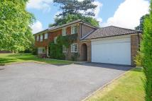 Detached house to rent in Ashcroft Park, Cobham...