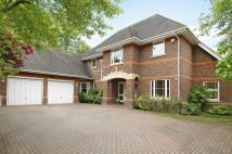 5 bed Detached house in Blue Cedars Place...