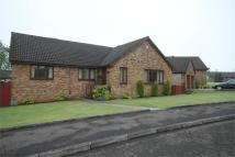 Detached Bungalow in Dean Park Gardens...
