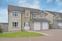 Detached property for sale in Alloa Park Drive...
