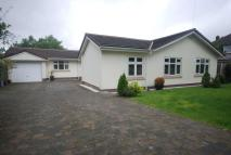 Bungalow to rent in Woodlands Drive, Worsley