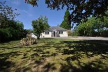 3 bed Detached Bungalow for sale in Thorrington, Essex