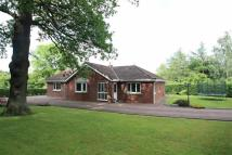 Detached Bungalow in Brabyns Park...
