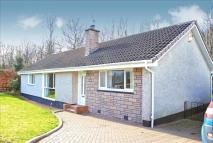 Detached Bungalow in Woodside, Houston...
