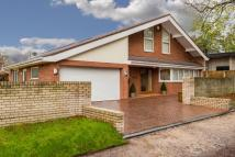 albert drive Detached house for sale