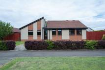 3 bed Detached Bungalow for sale in Morlich Court...