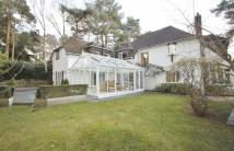 4 bed Detached house to rent in Lone Pine Drive, Ferndown