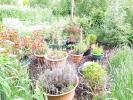 Rear Garden 028.jpg