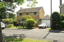 Mallinson Grove Detached property to rent
