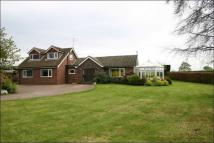 Detached Bungalow to rent in Eccleshall Road, Stone