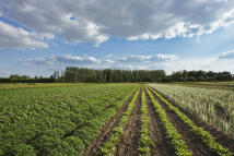 Land in Land at Outwell for sale