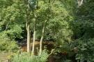 River - Gelt Wood