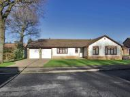 Detached Bungalow in Salehurst Road, Worth...