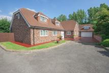 Detached Bungalow for sale in Shetland Close...