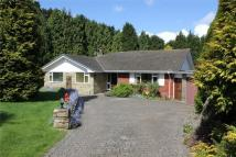 4 bed Detached Bungalow in Battle Gates, BATTLE...