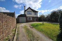 Detached property for sale in Beehive Lane, Chelmsford