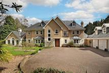 7 bed Detached house in Larch Avenue, Sunninghill