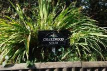 Detached property for sale in Charlwood Stud Russ Hill...