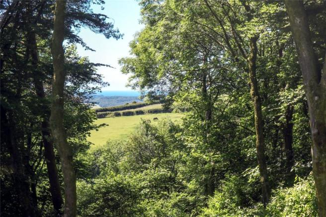 View Of Woodland/Sea