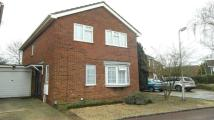 Link Detached House to rent in Felixstowe Close...