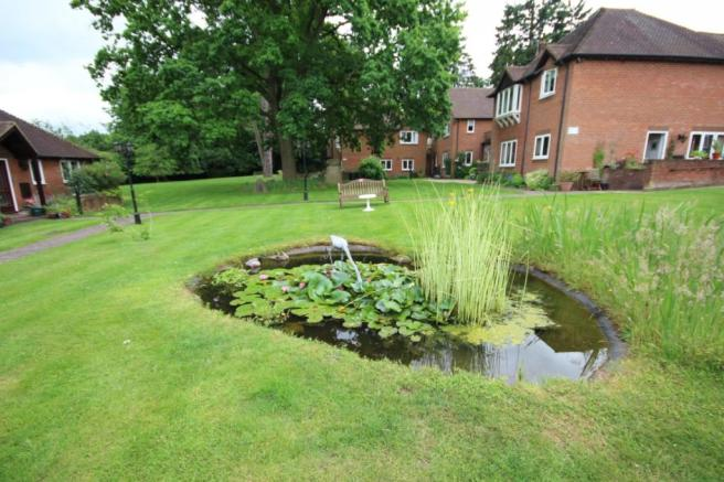 Pond and lawn