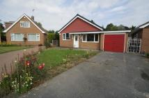 Detached Bungalow to rent in Holly Avenue, Breaston...