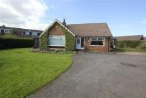 Detached Bungalow for sale in Park Rise, Great Ayton