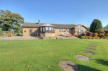 Bungalow in Iveston Lane, Iveston...