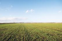 Land for sale in Land At Stilton...