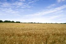 Land in Bassingham, Lincolnshire for sale