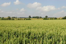 Land for sale in Dunsley Hall Farm Estate