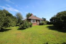 3 bed Detached Bungalow in Assington, Sudbury...