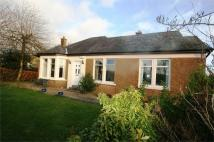 Detached Bungalow in West Balgrochan Road...