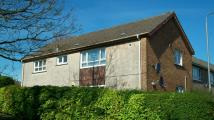 Flat to rent in Morton Road, Stewarton...