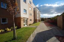 Flat to rent in Dalreoch Place...