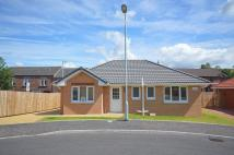 Detached Bungalow in Willowbank Gardens...