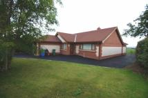 Detached Bungalow for sale in Denbigh Town