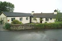 Detached Bungalow in Trelogan