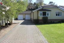 Detached Bungalow for sale in Mallard Road, Colehill...